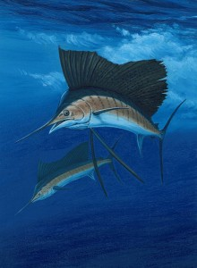 sailfish_dive800
